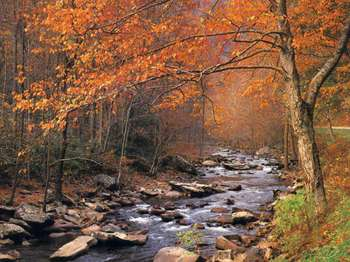 Autumn_brook_2